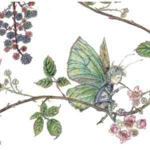 Bramble and Butterfly