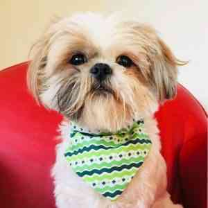 Ripple Green St Patrick's Day Dog Bandana