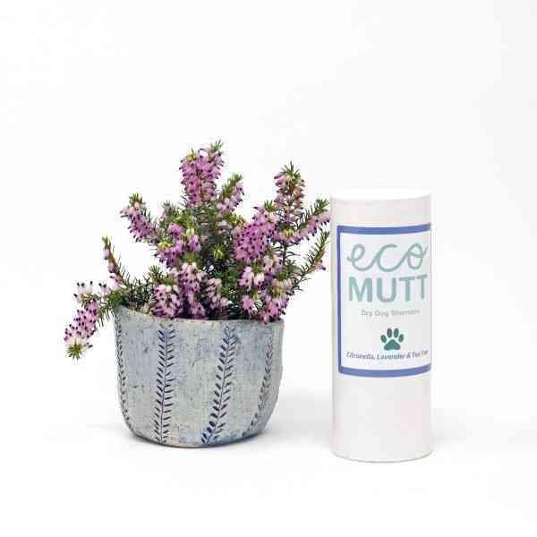 Citronella, lavender and tea tree DRY dog shampoo - dogshampoo cltt