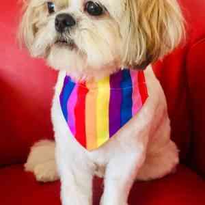 Pride Dog Bandana