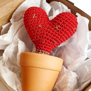 Cactus Heart in Pot