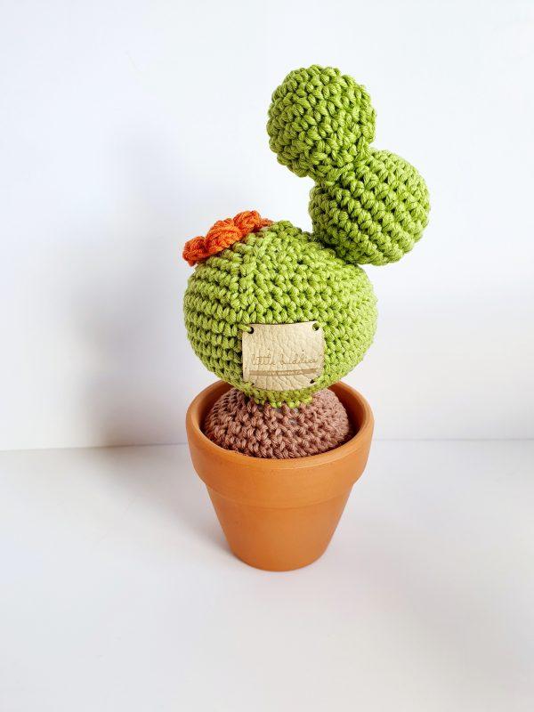 Cactus in Pot - 20200406 174335 scaled