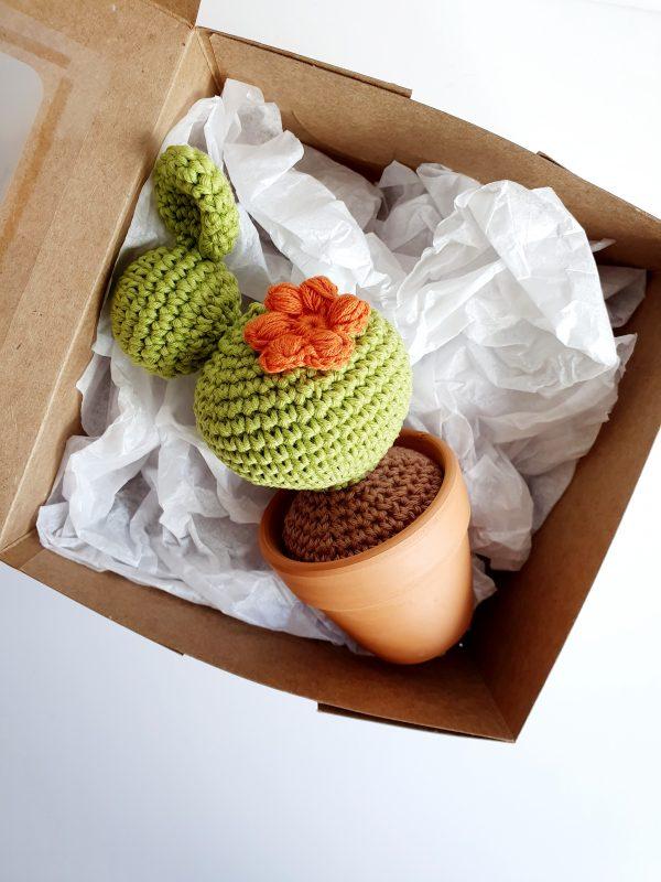 Cactus in Pot - 20200406 205858 scaled