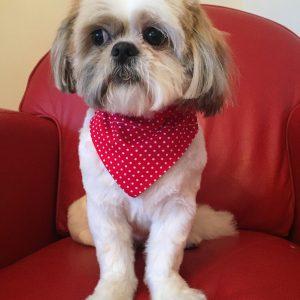 Dog Bandana Red with White Polka Dots