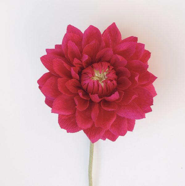 Small Dahlia crepe paper flower - fullsizeoutput 4c scaled