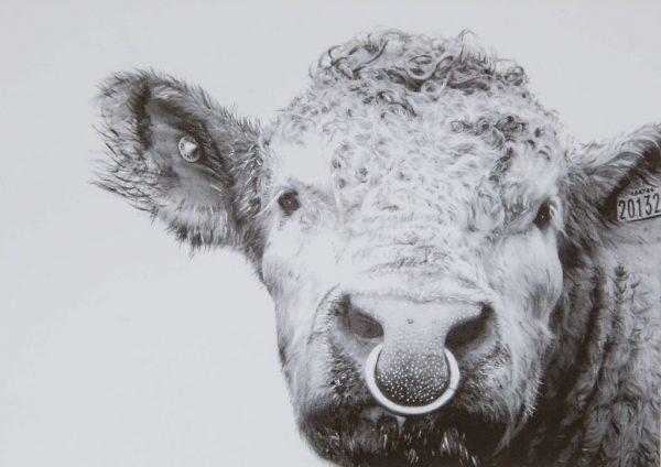 The Bull McCabe - Greeting Card
