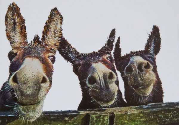 The Born Mucky Collection - Pack of 6 Greeting Cards - Kellyhood.com THE THREEE AMIGOS 1