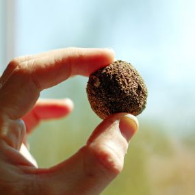 Irish Wildflower Seedbomb Gift Box - Seed bomb in hand image