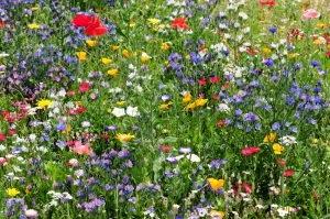 Busy Bee Kit - flower meadow