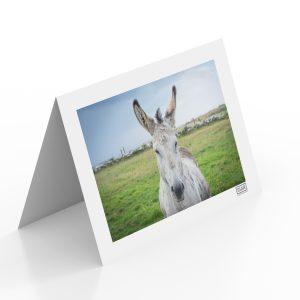 Black Donkey Greeting Card