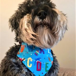 Dog Bandana Too Cool for School By Woof Stuff Dublin Ireland