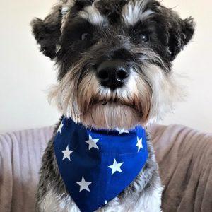 Dog Bandana Blue Big Star