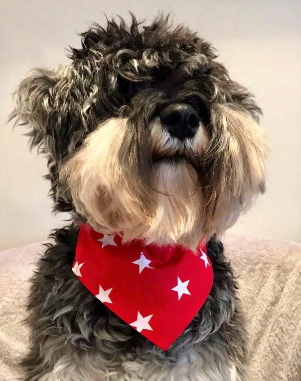 Dog Bandana Red Big Star