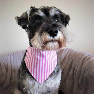 Dog Bandana Candy Stripe Delight