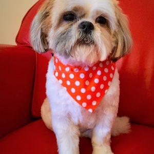 Dog Bandana Orange Polka Dots