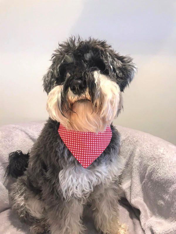 Dog Bandana Red Gingham