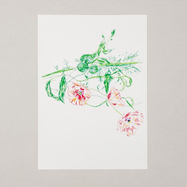 Poipin A3 Print
