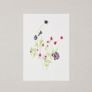 Wild Flowers A4 Print