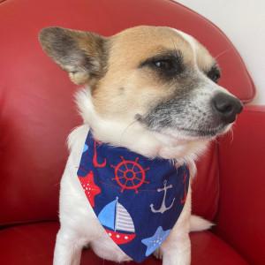Dog Bandana Blue Sailing Dog