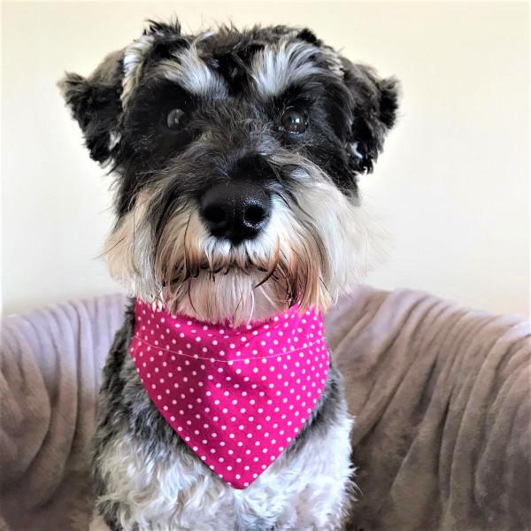 Dog Bandana Pink Polka Dot