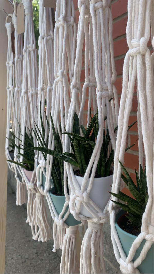 Mini Plant Hanger and Plant - 14CBE077 DCE4 462F B746 402C9CD93146