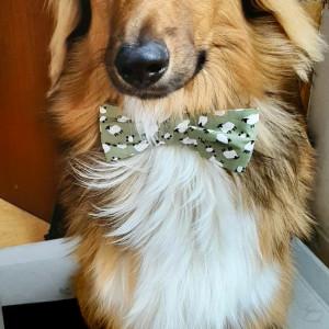 Sheep-ish Dog Bow Tie
