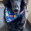 REVERSIBLE Dog Bandana, Dino Time - IMG 5890