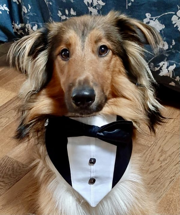 Reversible Tuxedo Dog Bandana - Grey and Black - 25121aeb f570 46e7 a0c7 c7fc02355ae6