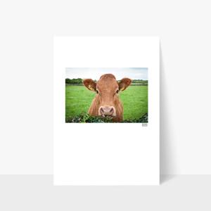 Rua the Cow - A4 Print