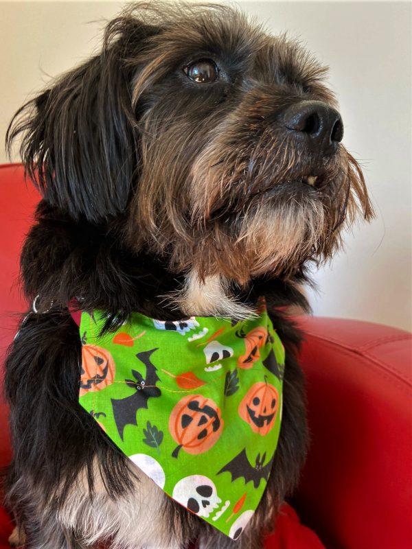 Green Pumpkins and Bats Halloween Dog Bandana