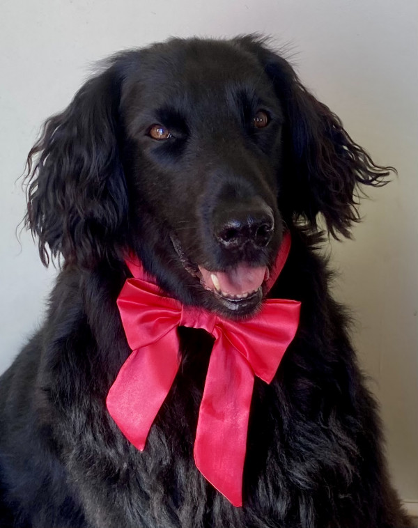 Red Satin Dog Bow