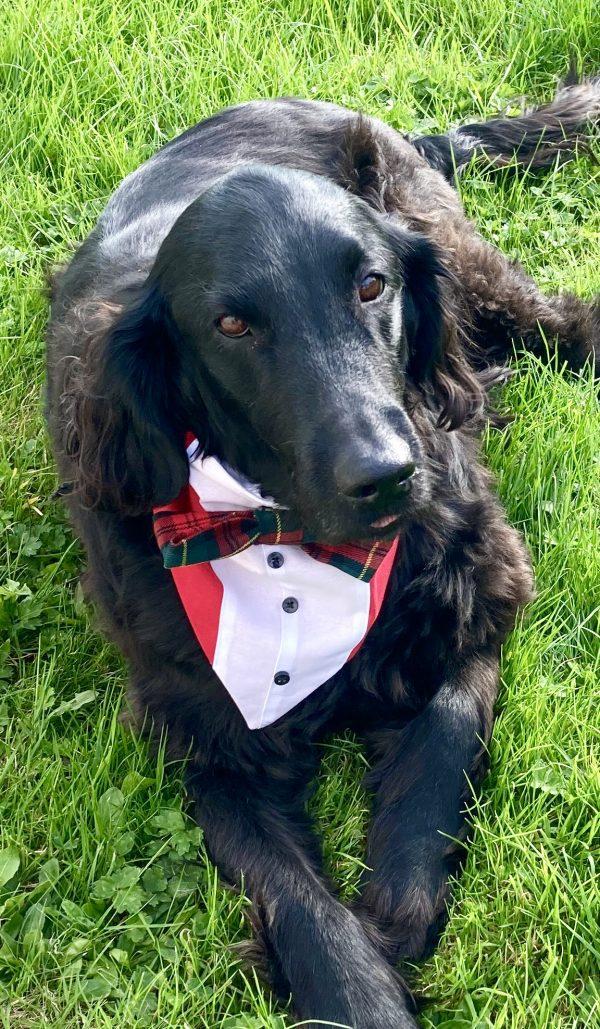 Reversible Tuxedo Dog Bandana, Tartan/Red - IMG 6134