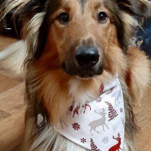 Christmas Reversible Dog Bandana - Winter Wonders / Gold Stars on Red